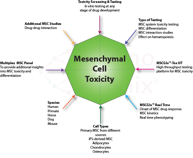 study mesenchymal stem cells msc essay Mesenchymal stromal cells (mscs) are a heterogeneous population of cells that can be derived from multiple tissue types in the body  mesenchymal stem and .
